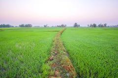 Campo por la mañana, ROI-ed Tailandia del arroz Foto de archivo libre de regalías