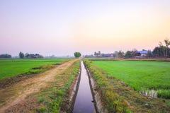 Campo por la mañana, ROI-ed Tailandia del arroz Foto de archivo