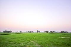 Campo por la mañana, ROI-ed Tailandia del arroz Imágenes de archivo libres de regalías
