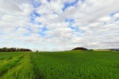 Campo in primavera Immagini Stock