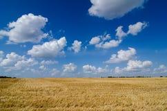 campo pronto dell'azienda agricola del raccolto con cielo blu Immagini Stock Libere da Diritti