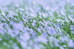 Campo que florece, cultivo agrícola del lino del lino Foto de archivo