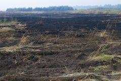 Campo queimado Imagem de Stock