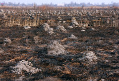 Campo quemado Fotos de archivo libres de regalías