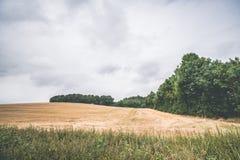 Campo raccolto con gli alberi verdi Fotografie Stock