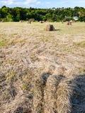 campo raccolto con i mucchi di fieno in Bretagna Immagini Stock Libere da Diritti