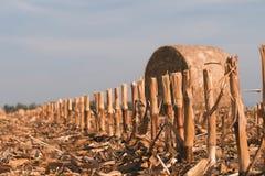 Campo raccolto con le balle della paglia in autunno Immagini Stock