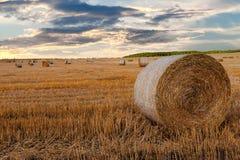 Campo raccolto con le balle della paglia in estate Fotografia Stock Libera da Diritti