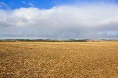 Campo raccolto con paesaggio Fotografia Stock Libera da Diritti