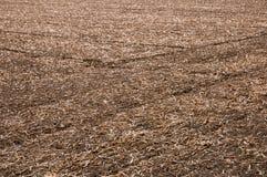 Campo raccolto di agricoltura Fotografia Stock Libera da Diritti