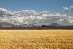 Campo raccolto in Provenza, Francia Immagini Stock