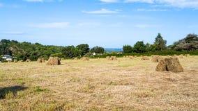 campo raccolto sulla costa del Manica Immagine Stock