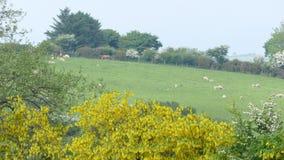 Campo Regno Unito degli agricoltori di Lingua gallese Fotografia Stock Libera da Diritti