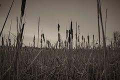 Campo reservado en la puesta del sol imágenes de archivo libres de regalías
