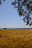 Campo Rhodos Grécia do ponto da orelha Imagem de Stock