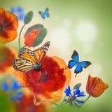 Campo rojo de las amapolas y acianos azules Fotografía de archivo libre de regalías