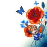 Campo rojo de las amapolas y acianos azules Fotos de archivo libres de regalías