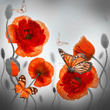 Campo rosso dei papaveri e fiordalisi blu Fotografia Stock Libera da Diritti