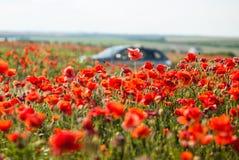 Campo rosso del papavero Fotografia Stock Libera da Diritti