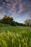 Campo rural Fotografia de Stock