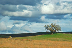 Campo rural Imagens de Stock