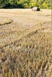 Campo rural após a colheita do arroz Imagens de Stock Royalty Free