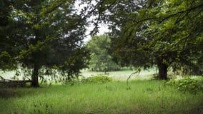 Campo rural com árvores e grama luxúria Foto de Stock