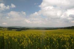Campo rural con las flores amarillas imagen de archivo libre de regalías