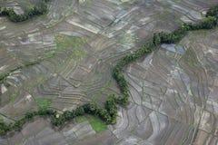 Campo rural del arroz Foto de archivo libre de regalías