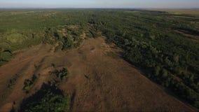 Campo rural en la puesta del sol, cantidad de la antena del abejón metrajes