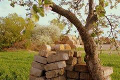 Campo rural na mola Imagens de Stock Royalty Free
