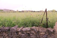 Campo rurale immagine stock