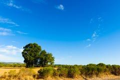 Campo rurale Fotografia Stock Libera da Diritti