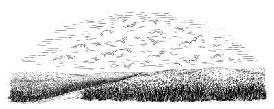 Campo rurale con grano maturo su fondo delle nuvole Vettore royalty illustrazione gratis