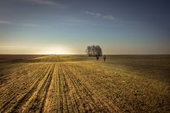 Campo rurale di agricoltura ad alba con la gente che entra in distanza nel paesaggio di andata della campagna di orizzonte del ci fotografia stock
