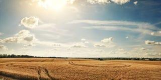 Campo rurale di panorama con grano maturo Fotografia Stock