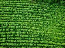 Campo rurale di vista aerea, agricoltura Sfondo naturale Foto dal fuco Immagini Stock