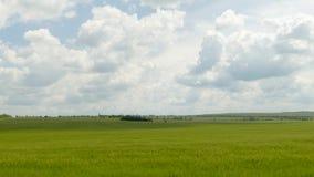 Campo rurale verde nell'ambito di paesaggio nuvoloso stock footage
