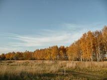 Campo russo Fotografia Stock Libera da Diritti