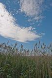 Campo a Rye Fotografia Stock Libera da Diritti