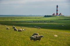 Campo Sankt Peter Ording de las ovejas del westerhever del faro imagen de archivo libre de regalías