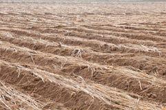 Campo secco colore marrone coltivato fotografia stock libera da diritti