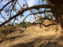 Campo seco foto de archivo