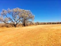 Campo seco da terra no inverno Fotos de Stock Royalty Free