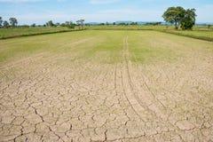 Campo seco del arroz Foto de archivo