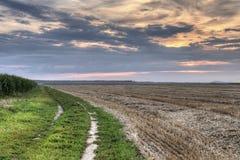 Campo segado por el campo de maíz en la puesta del sol fotos de archivo