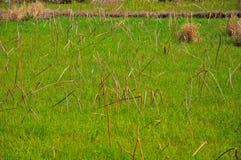 Campo selvaggio verde Fotografie Stock Libere da Diritti