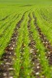 Campo semeado foto de stock royalty free