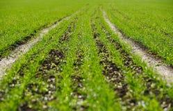 Campo semeado imagens de stock royalty free