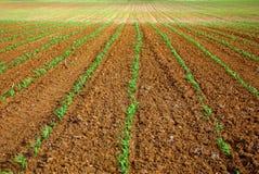 Campo semeado Fotografia de Stock